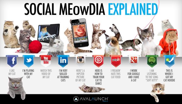 socialmediagatos